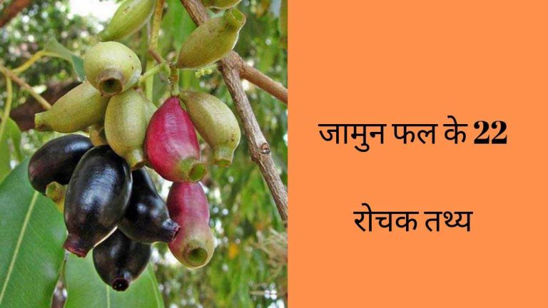jamun facts in hindi