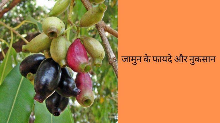 jamun fruits benefits in hindi