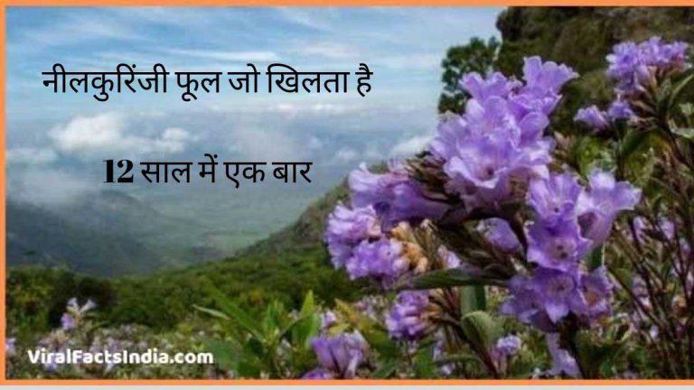 neelakuriniji flower information in hindi