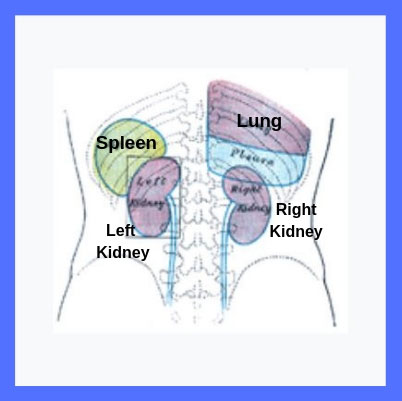 what is spleen in hindi