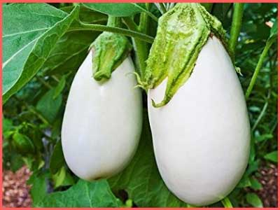all vegetables name in hindi and english 1
