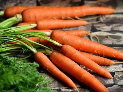 carrot name in english