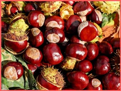 dry fruits name in hindi and engish