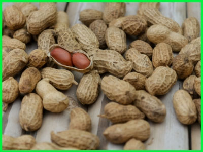 ground nut meaning in english