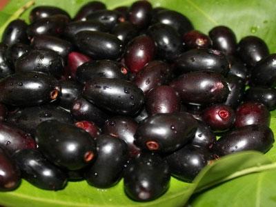 jamun fruit name in sanskrit