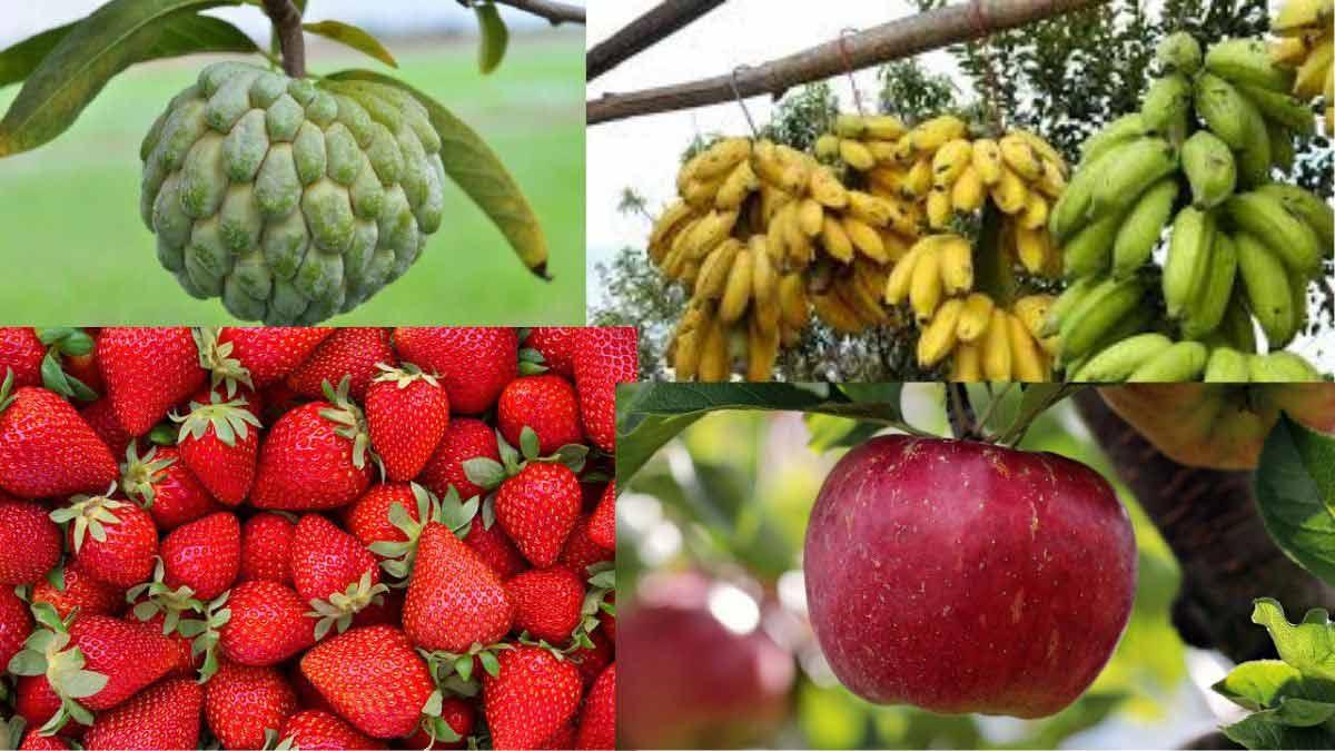 Fruits Name in Sanskrit, Hindi English | फलों के