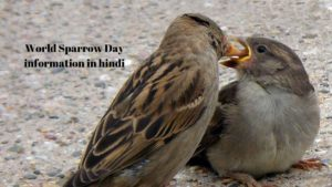 World sparrow day information in hindi