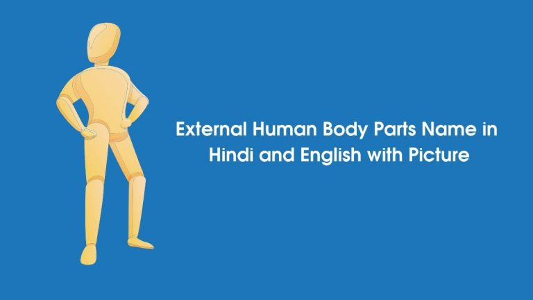 External human body parts name in hindi and english with picture