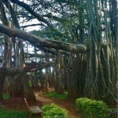 which is the national tree of india in hindi, भारत का राष्ट्रीय पेड़ कोनसा है|