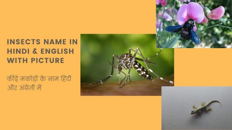insects name in hindi and english with picture