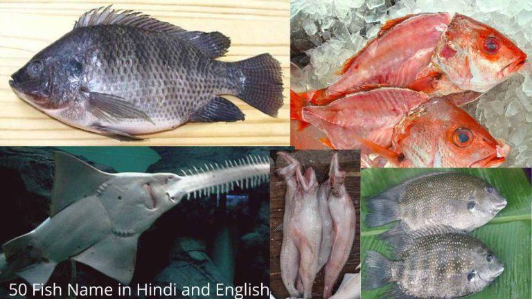 all fish name in hindi and english