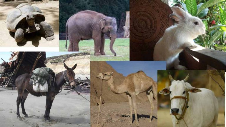 name of domestic animals in Hindi and English with picture