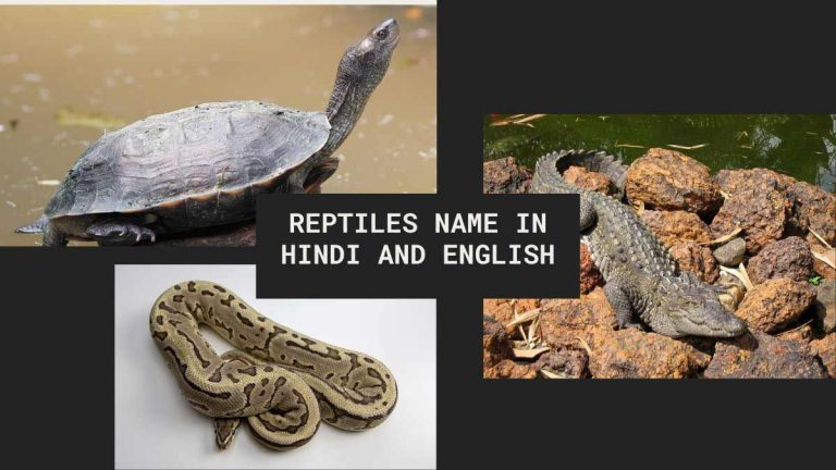reptiles name in hindi and english with picture