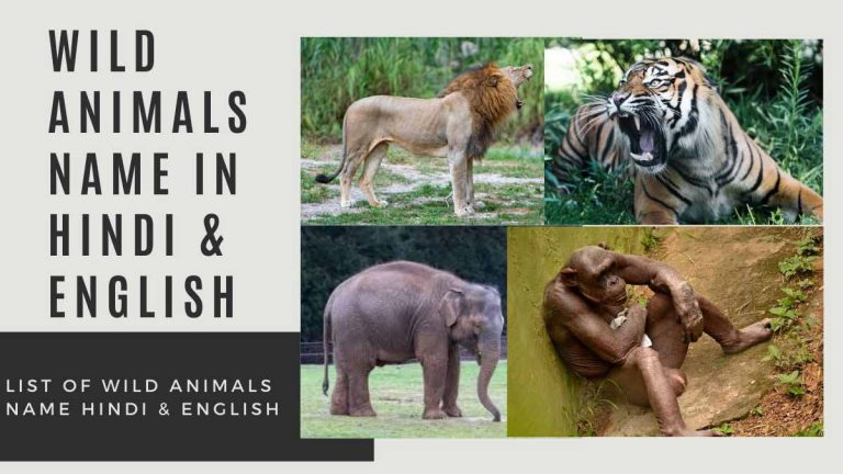 name of wild animals in hindi and english with picture