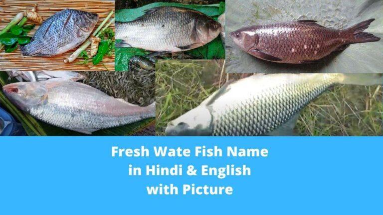 fresh water fish name in hindi and english