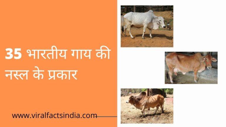 Indian cow breeds name in hindi, भारतीय देसी गाय की नस्ल के प्रकार