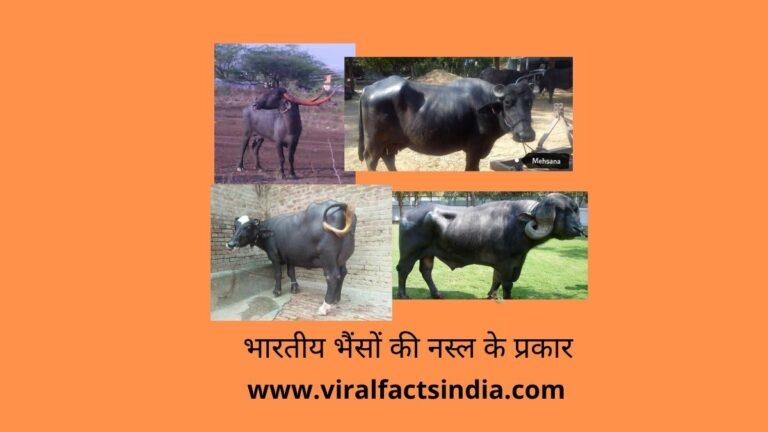 indian buffalo breeds in hindi