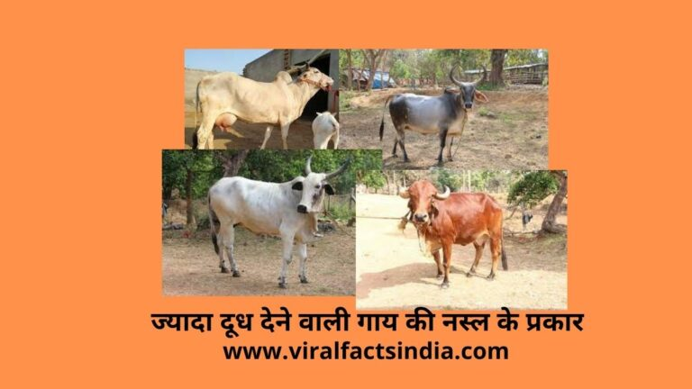 ज्यादा दूध देने वाली देसी गाय के नाम की सूची